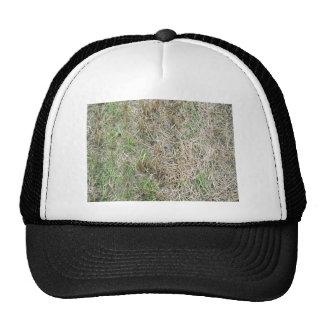 Dry Grass Background Texture Cap