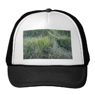 Dry grass in the water mesh hats