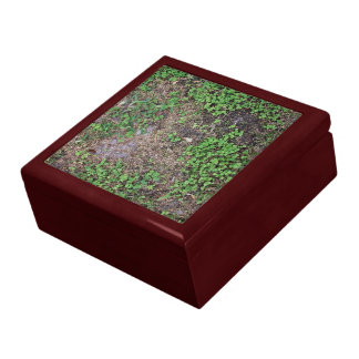 Dry Ground with Grass and  Dollar Weed Jewelry Boxes