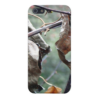 Dry leaves iPhone4 Case iPhone 5/5S Covers