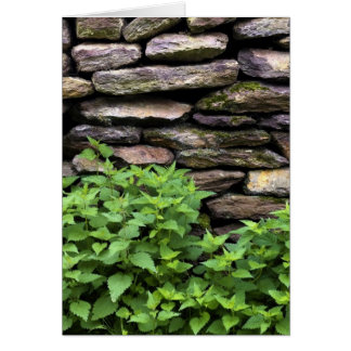Dry Stone wall Card