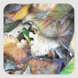 Dry Tilia Leaves Square Stickers