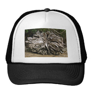 Dry tree roots in beach hats
