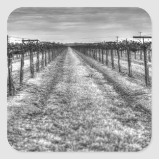 Dry Vines Square Sticker