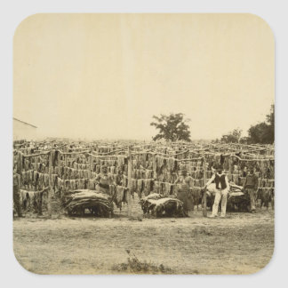 Drying leather, Argentina (albumen print on card) Square Sticker