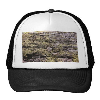 Drying moss on fallen tree decaying in wilderness mesh hats