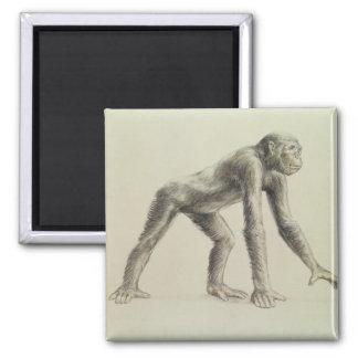 Dryopithecus Africanus Square Magnet