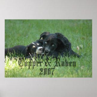 DSC_6598, Copper & Raven            , 2007 Posters