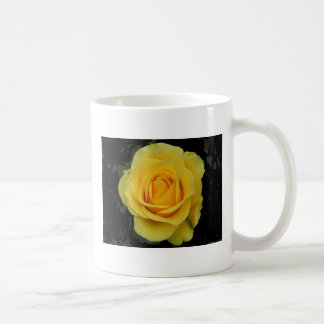 DSCF0127 Yellow Rose Basic White Mug