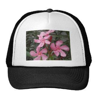 DSCN0131.JPG HAT