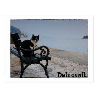 Dubrovnik Cat Postcard