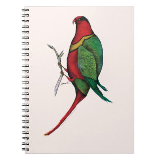 duchess lorikeet, tony fernandes notebook