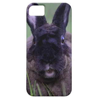 Duchess the Chocolate Bunny iPhone case Barely There iPhone 5 Case