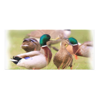 Duck BookMark Full Color Rack Card