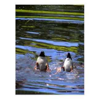 Duck Butts Postcard