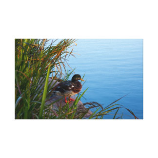 Duck by the water canvas print