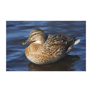 Duck Stretched Canvas Prints