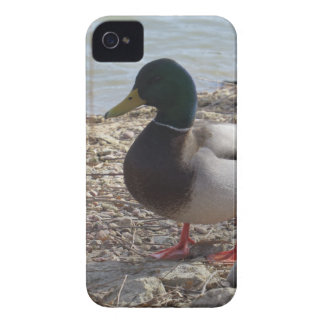 Duck Case-Mate iPhone 4 Cases
