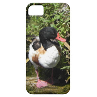 Duck iPhone 5 Cover