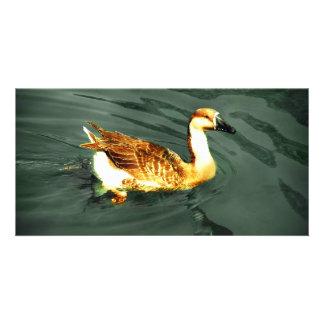 Duck Customized Photo Card