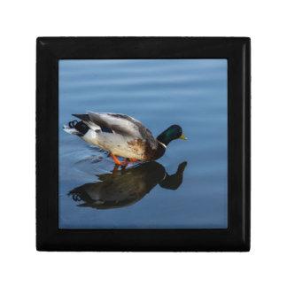 Duck, Duck...... Trinket Box