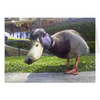"""Duck Encounter"" Card"