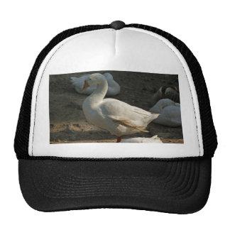 Duck enjoying the winter sun in Delhi Zoo Mesh Hat