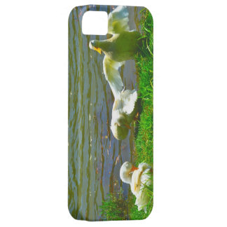 Duck Family iPhone 5 Case