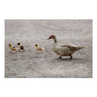 Duck family crossing road posters