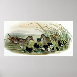 Duck family Print