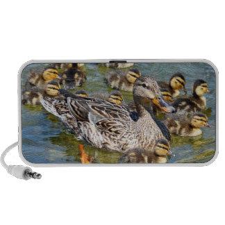 Duck Family Speakers