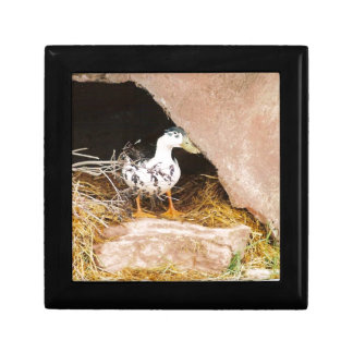Duck Guarding Cave Small Square Gift Box
