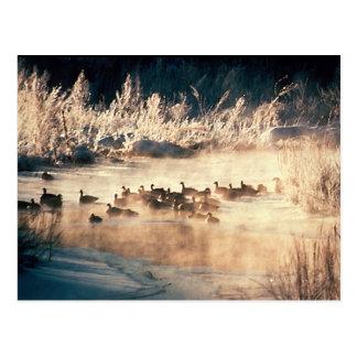 Duck Hunting Logo Postcard