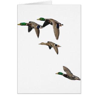Duck Hunting Mallards in Flight Card