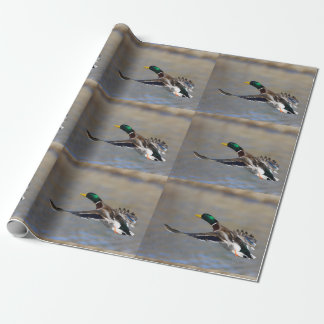 duck in flight wrapping paper