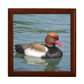 Duck in The Water Gift Boxes