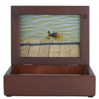 Duck in water keepsake box