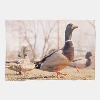 """Duck Kitchen Towel 16"""" x 24"""""""
