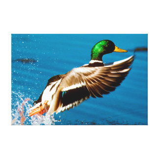 Duck Lift Off Gallery Wrapped Canvas