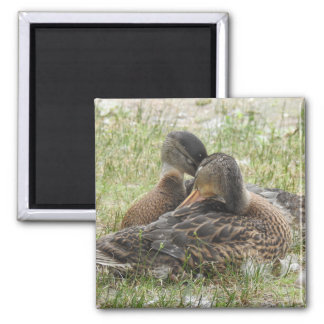 Duck Love -BFF Magnet