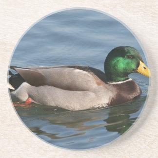 Duck Male Mallard Drink Coasters