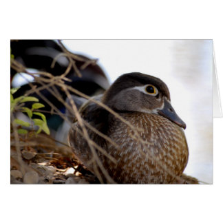 Duck Note Card