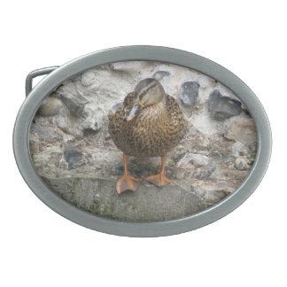 Duck on a Wall Belt Buckle
