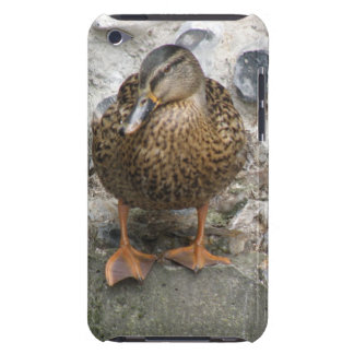 Duck on a Wall  Case-Mate iPod Touch Case