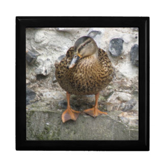 Duck on a Wall Gift Box
