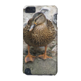 Duck on a Wall iPod Case