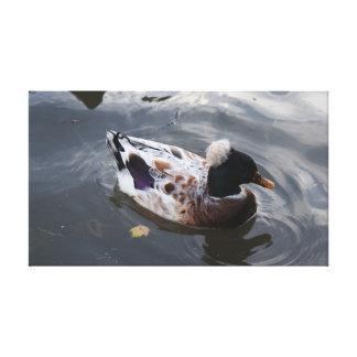 Duck on evening pond canvas print