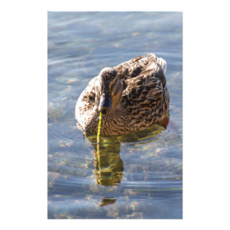 duck on lake stationery