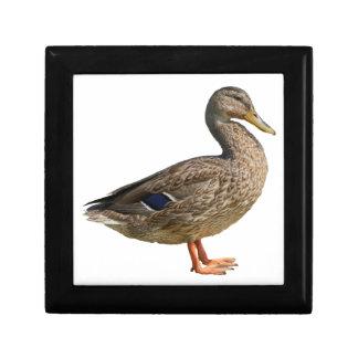 duck on rock at lake gift box