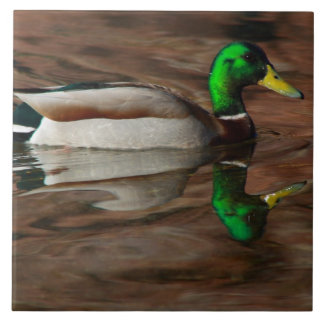 Duck on the Colorado River Tile